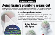 Did You Know? - Aging brain's plumbing wears out