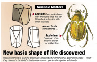 Did You Know? - New basic shape of life discovered
